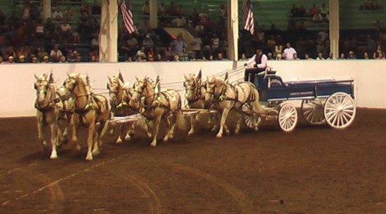 1000+ images about American Cream Draft Horses on Pinterest | Draft horses, Cream and Horses for ...